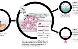 Insect Allies: ¿proyecto agrícola o militar?